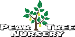 Pear Tree Nursery